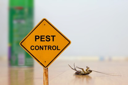 Pest Contol in Kew, North Sheen, TW9. Call Now 020 8166 9746