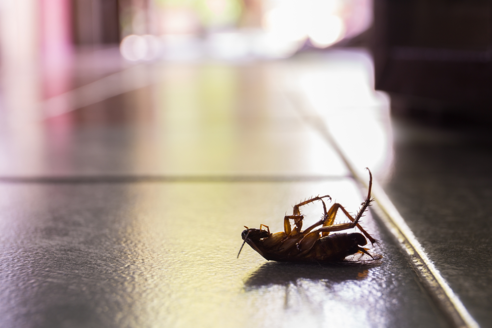 Cockroach Control, Pest Control in Kew, North Sheen, TW9. Call Now 020 8166 9746