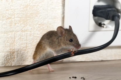 Pest Control in Kew, North Sheen, TW9. Call Now! 020 8166 9746